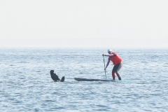 The-Crossing-SUP-Cape-Town-138